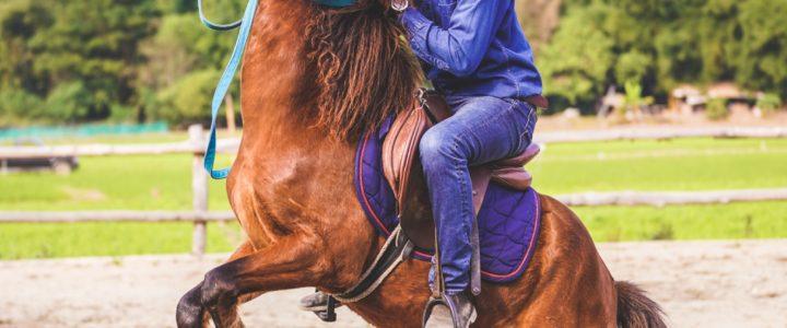 Pong Horse Park ปงยั้งม้า