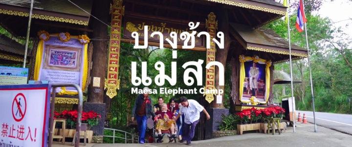 Maesa Elephant Camp ปางช้างแม่สา เชียงใหม่