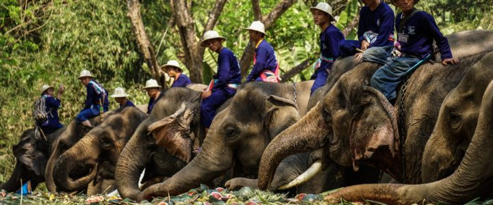National Thai Elephant Day 2018