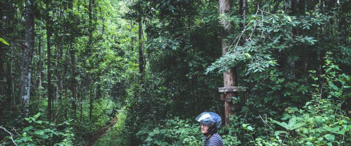 Mae Kuang Dam เขื่อนแม่กวง ป่าสักงาม มีอะไรดี